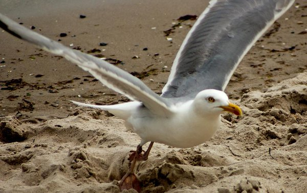 seagull day 14